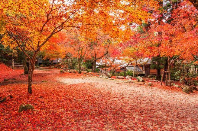Momiji en un parque de Tokyo en otoño.